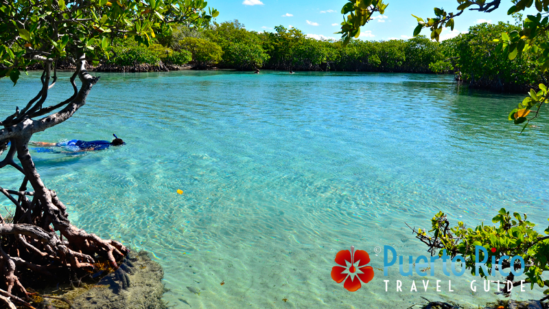 Gilligan's Island, Guanica, Puerto Rico - Best snorkeling beaches in Puerto Rico
