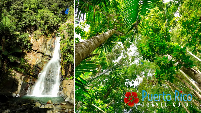 El Yunque - Best Things to Do in Puerto Rico
