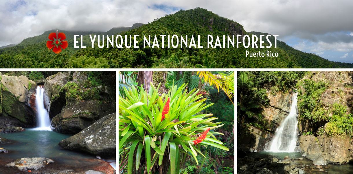 El Yunque National Rainforest - Rio Grande, Puerto Rico