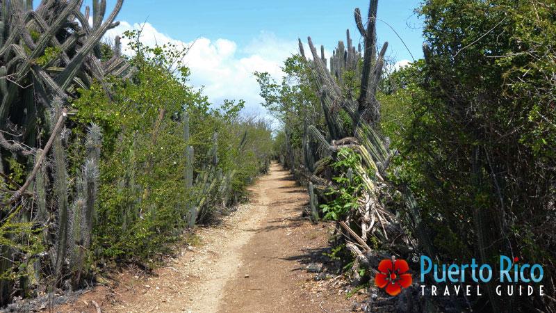 Hiking in Caja de Muertos Island - Puerto Rico