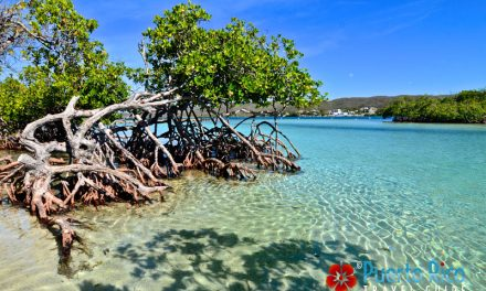 Gilligan's Island, Puerto Rico <BR><H3>Guanica – Full Visitor's Guide – Top Tours, Ferry / Water Taxi Info, Visiting Tips, Photos, Videos…</h3>