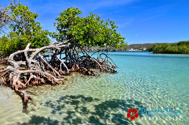 Clear water at Gilligan's Island, Guanica, Puerto Rico