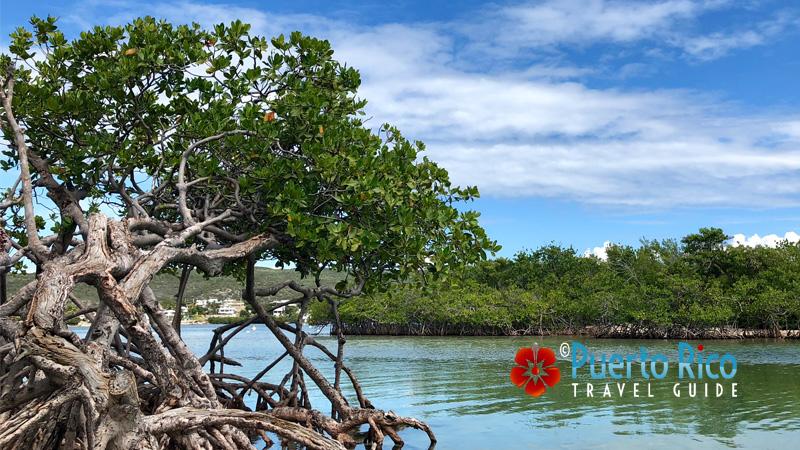 Giligan's Island - Guanica, Puerto Rico
