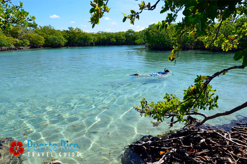 Gilligan's Island - one of the best snorkeling beaches in Puerto Rico