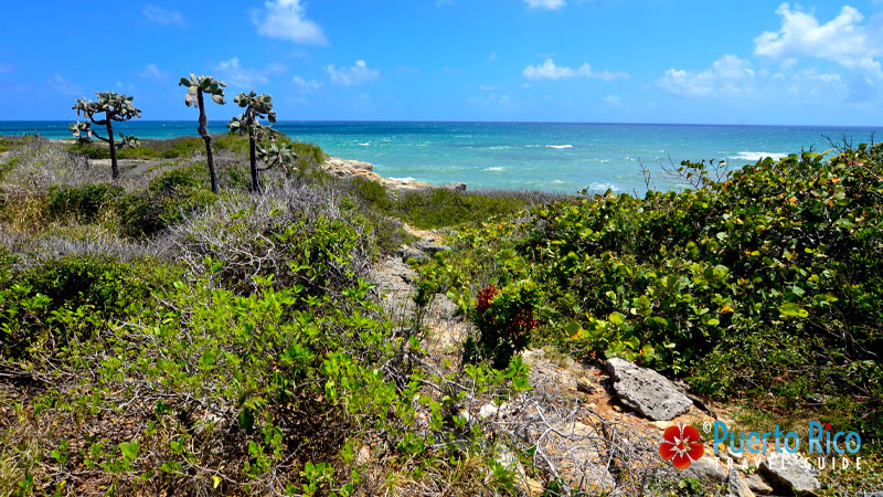 The Guanica State Forest - Best attractions in Puerto Rico's West Region