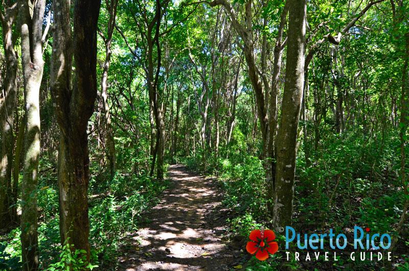 Hiking Trail to Colora Beach in Fajardo, Puerto Rico