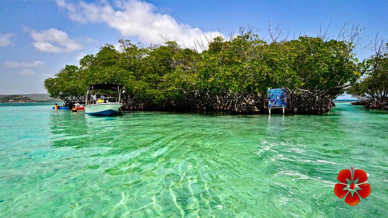 Caracoles - Lajas - Puerto Rico Islands