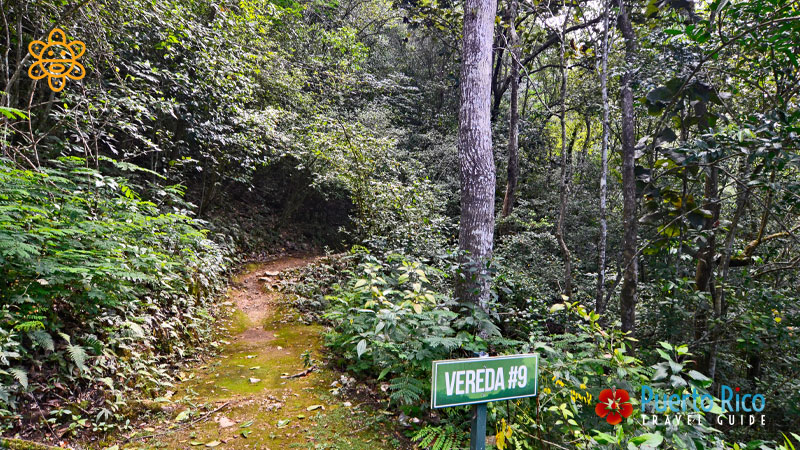 Guajataca Forest - Places to Visit in Isabela, Puerto Rico