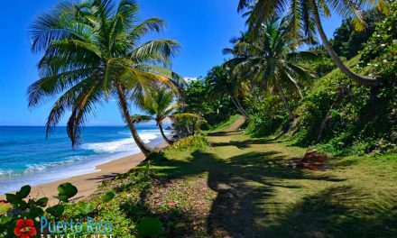 Explore the Best of Rincon, Puerto Rico <BR><h3>Best of Tourism – Beaches, Things to Do, Hotels, Map, Travel Guide</h3>