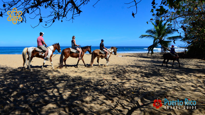 Horseback Riding - Things to do in Isabela, Puerto Rico