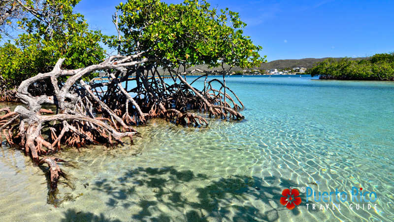 Gilligan's Island - Puerto Rico West Coast - Best Places to Visit