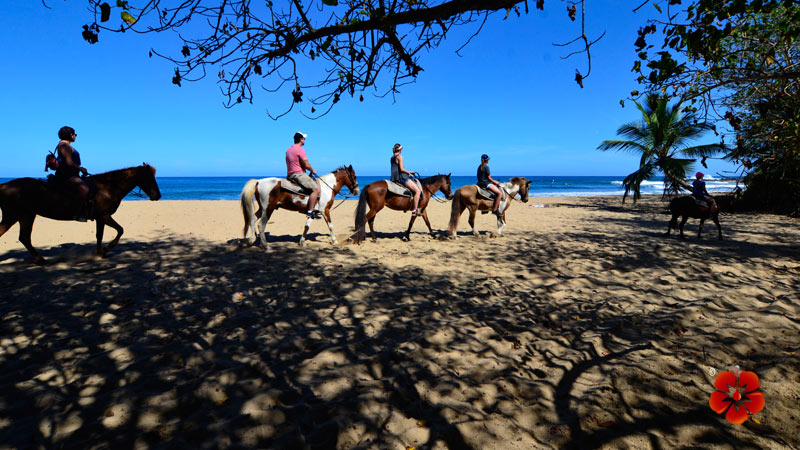 Horseback Riding Tour in Rincon, Puerto Rico